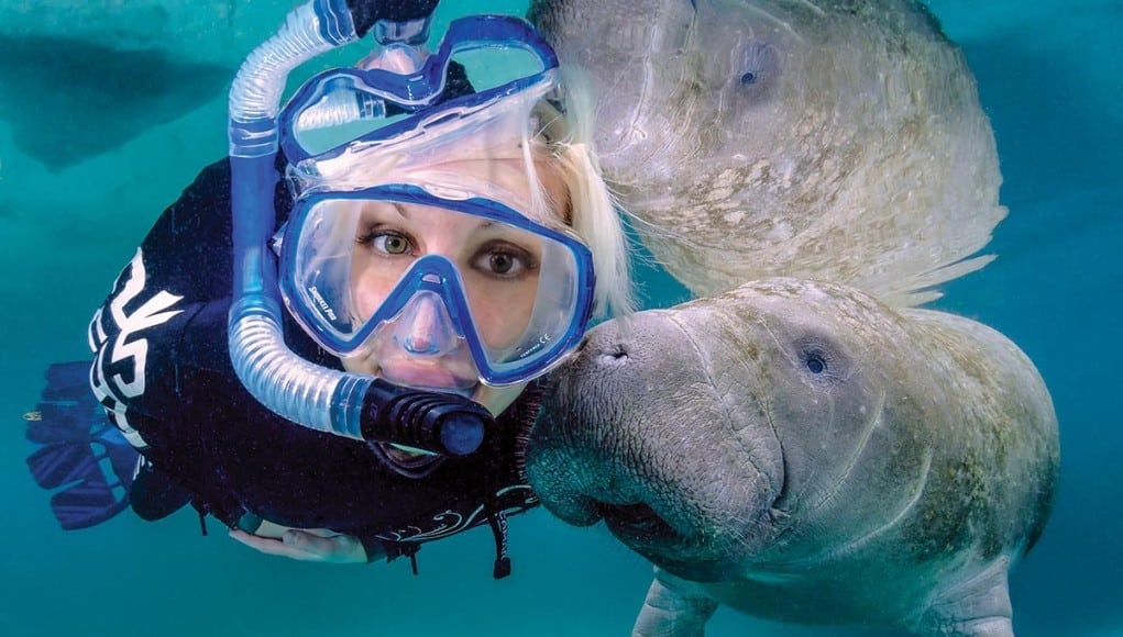 manatees, crystal river, swimming with manatees, where to swim with manatees,