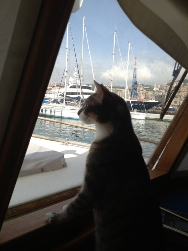 Pepe the cat is a liveaboard