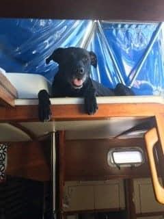 Buddy on Deck
