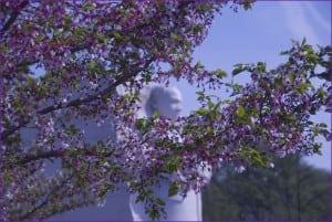 Spring Flower Festivals