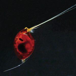 tiny-giants-marine-microbes