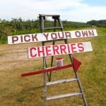 Cherries - Pick Your Own Sign 02