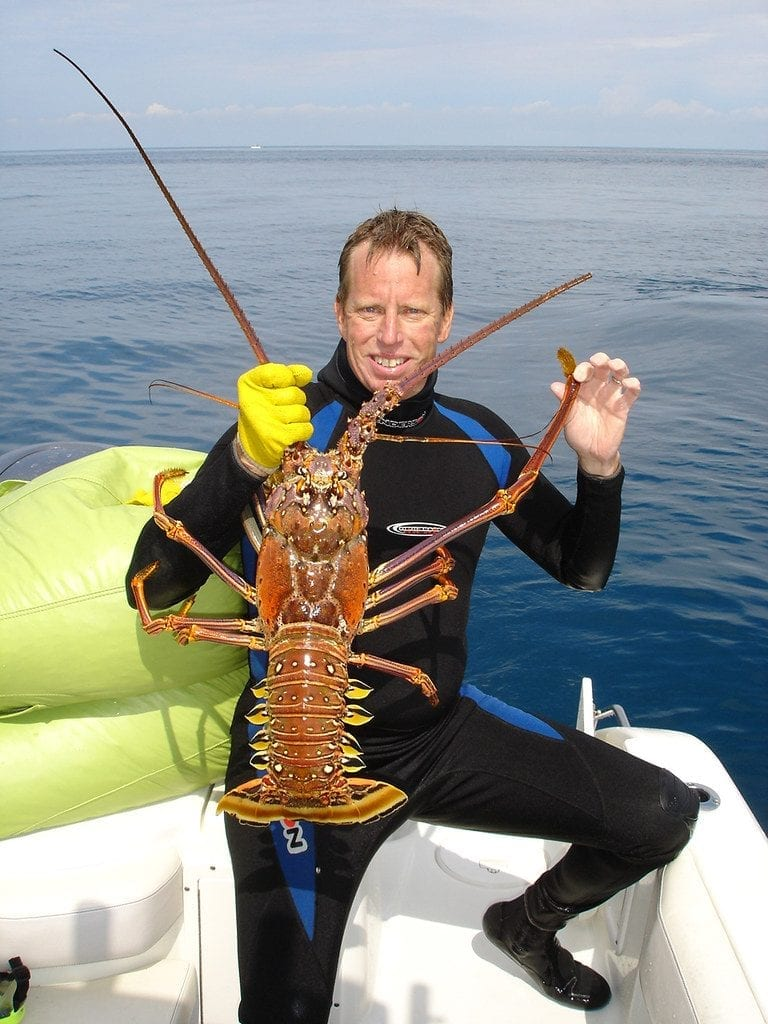 Very large spiny lobster