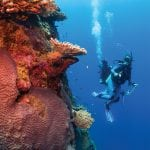 scuba, scuba dive, where to scuba, where to dive
