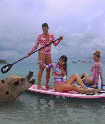pig pictures, Pig Pics, swimming pigs, Exumas, the Bahamas