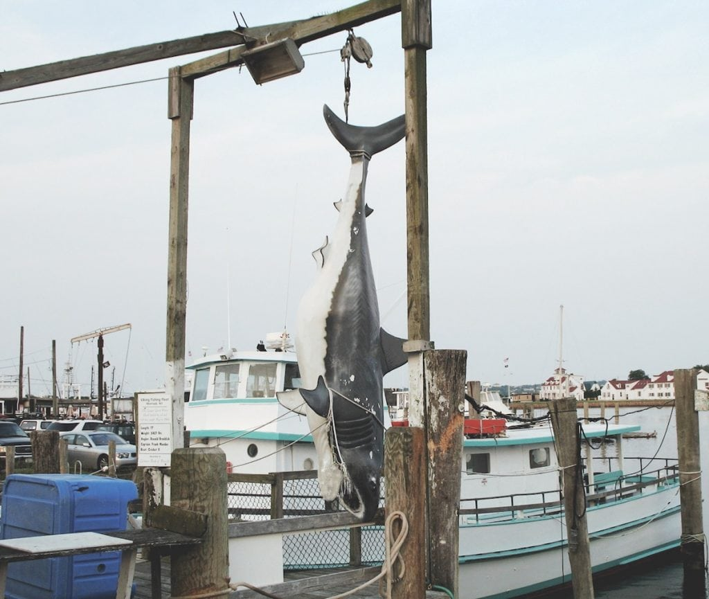 montauk new york southern boating ForMontauk Shark Fishing