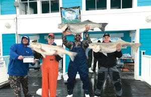 Winter Chesapeake Fishing, rockfish, striped bass
