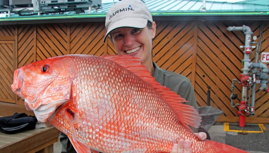 a red snapper in the Gulf