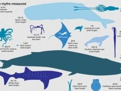 an image of some of the largest sea creatures