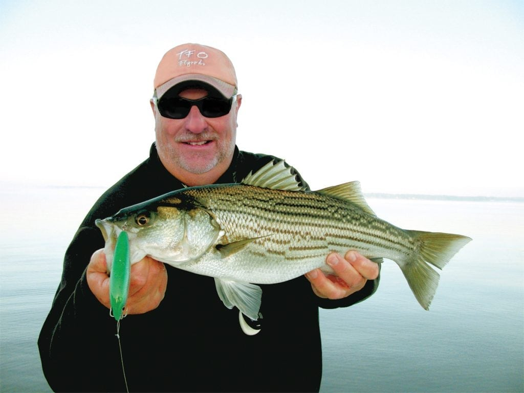 an image of a striped bass caught with the best fishing lures