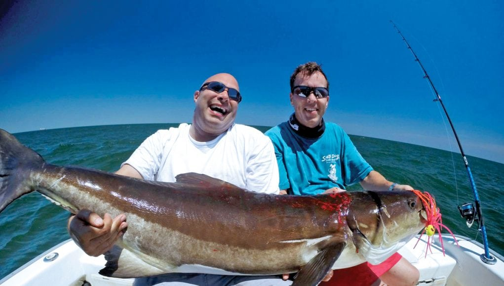 An image of a monster conia from the open cobia season