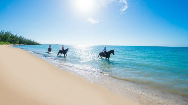 an image of Horseback Riding in The Bahamas