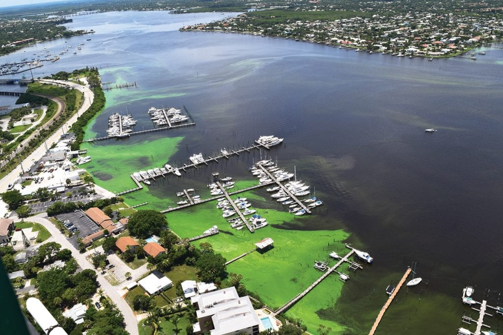 an image of Blue-Green Algae in Martin County