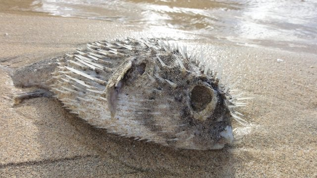 Red tide and dead marine life