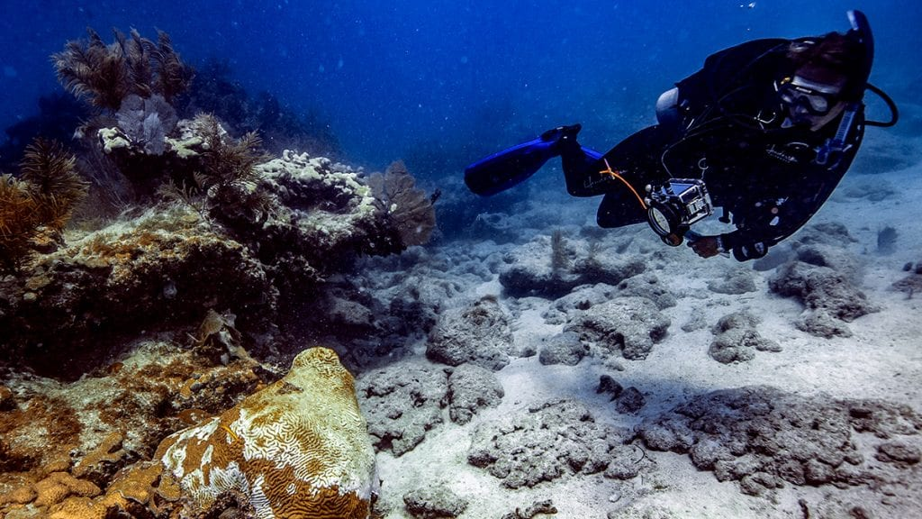 a scientist documents stony coral tissue disease