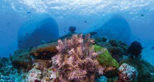 Top 5 Dive Sites