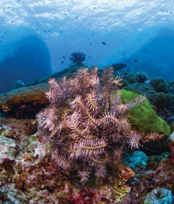 Top 5 Dive Sites