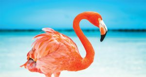 Birds in the Bahamas