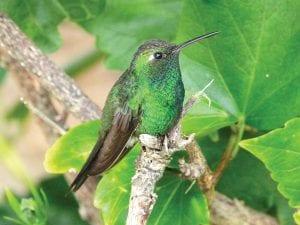 Birding in the Bahamas