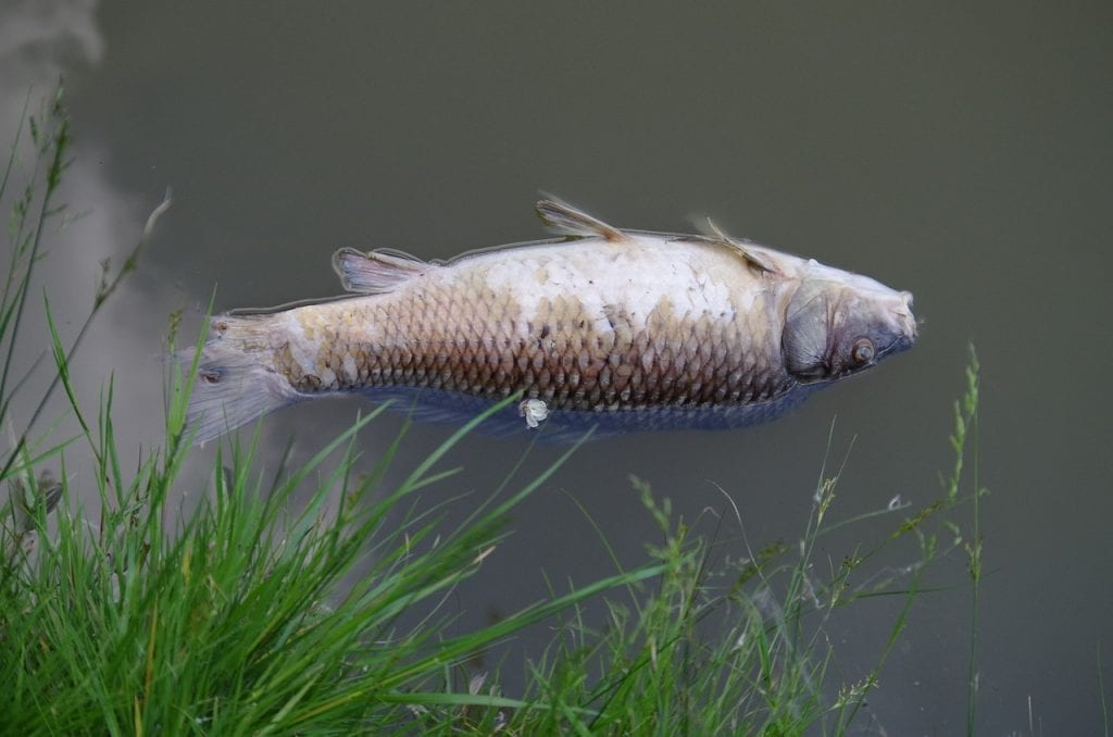 an image of a dead fish shows how climate change impacts fishing