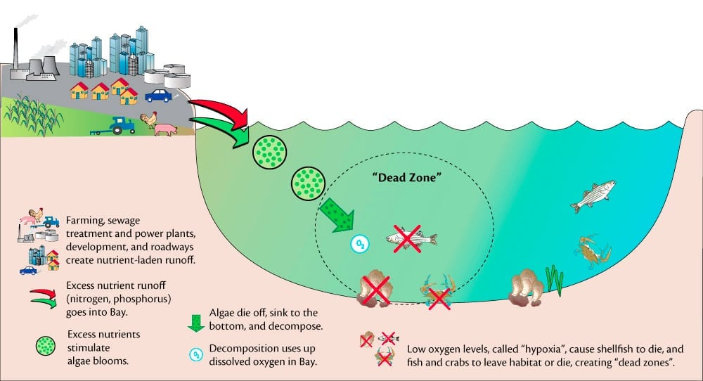 a graphic describing how climate change impacts fishing