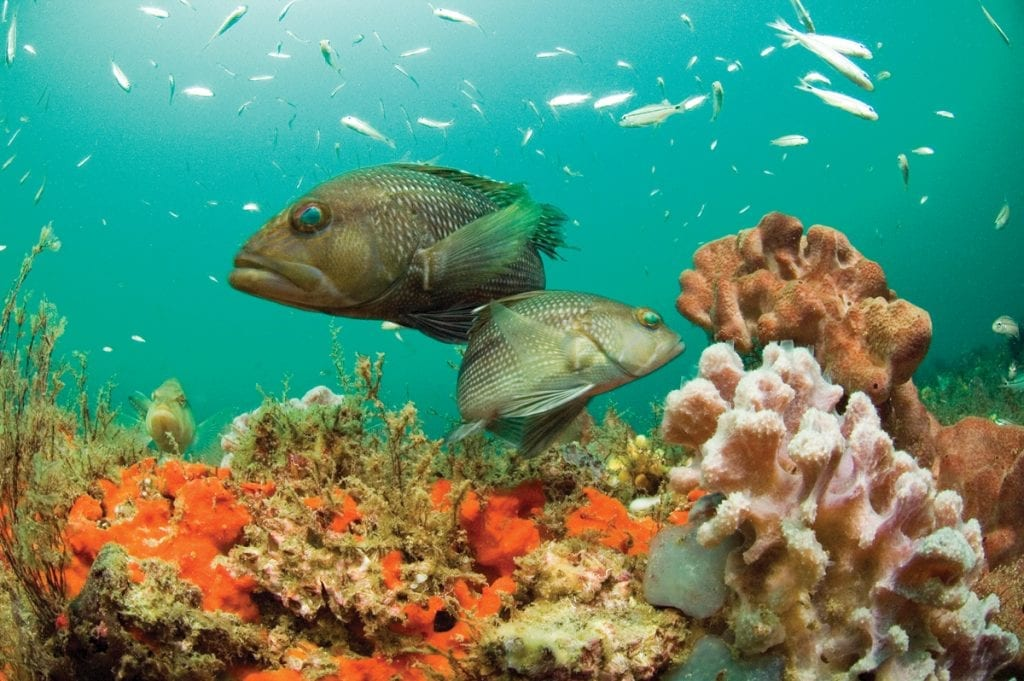 an image of fish at a National Marine Sanctuary