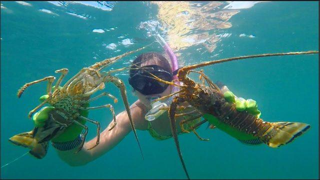 a woman diving during lobster mini season