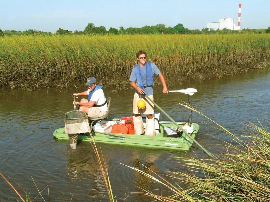 This is an image of grass shrimp monitoring